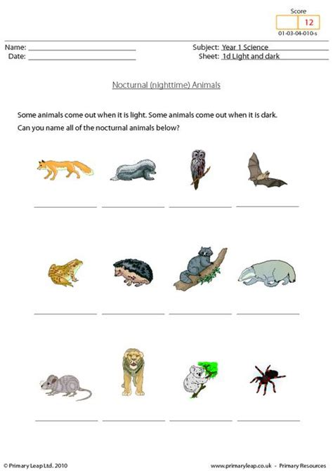 printable nocturnal animal pictures year 1 science nocturnal animals primary resources from