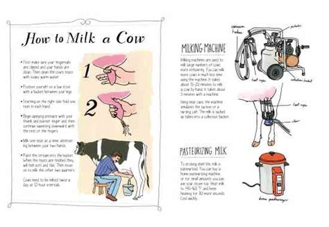 how to a cow farm anatomy how to milk a cow animals grit magazine