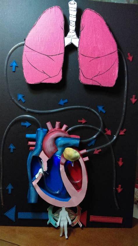 molde para hacer sistema respiratorio con foamy proyecto sistema circulatorio circulatory system project