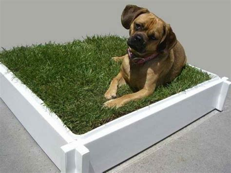 how to crate a for potty how to repairs how to make porch potty for your pet bathroom grass for dogs