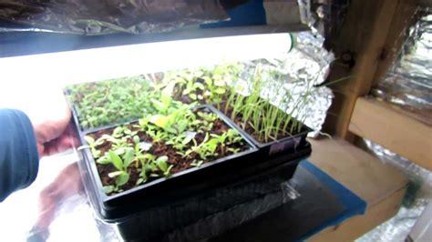 basic vegetable grow light closet design