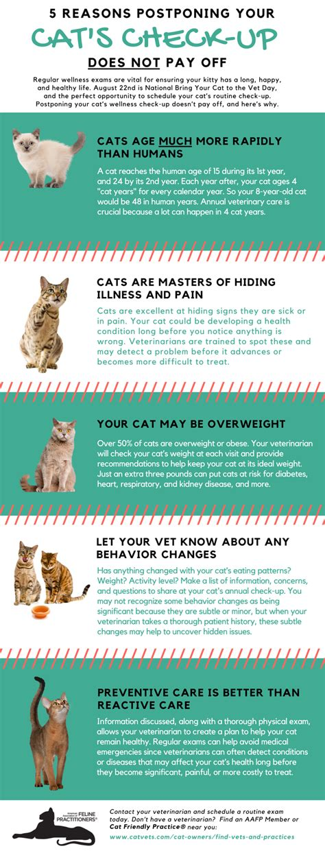 How Should A Background Check Take How Often Should You Take Your Cat To The Vet For A Check Up Cats