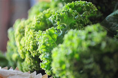beautiful kale maninas food matters