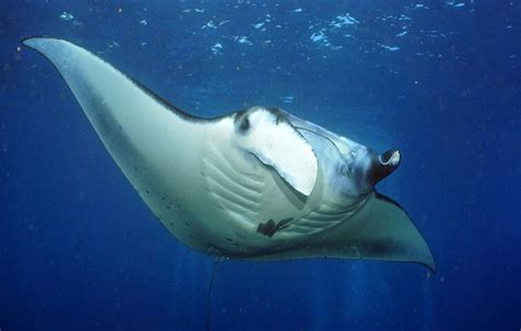 Bali Diving Package diving packages bali nico dives cool scuba diving
