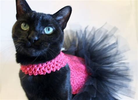 Cat Black Pink cat clothes cat tutu pink and black cat by