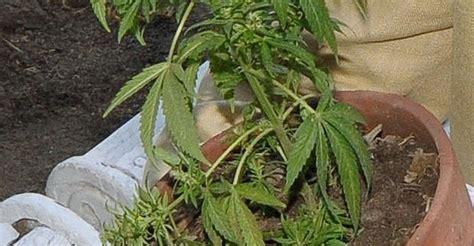 imagenes de weed reales imagenes de marihuana para dibujar cliparts co