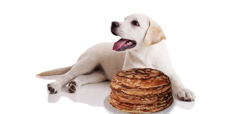 can dogs pancakes potato pancakes for dogs an easy recipe