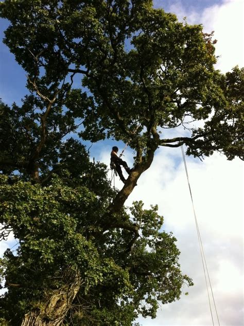 cluster exeter 9 tree east tree surgeons covering exeter mid east west dorset south somerset