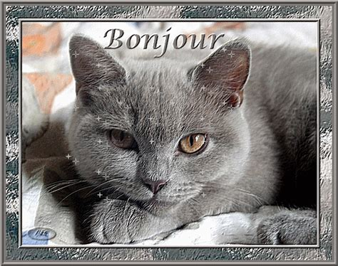 Animal Bon Dormeur by Gifs Animes Chats Spanou75