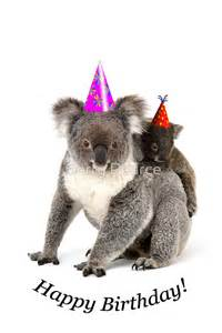 Wall Art Australia Stickers quot a koala happy birthday quot greeting cards by gerry pearce
