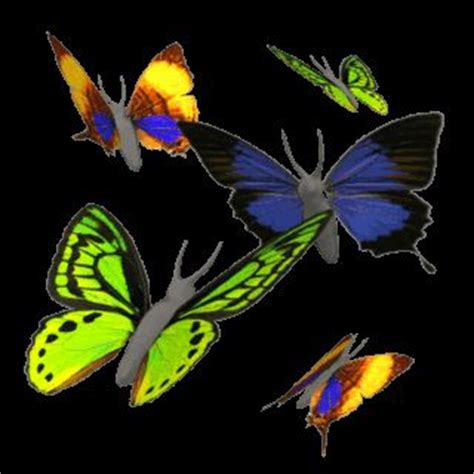 Butterflies 3d Gifs Flowers Animations Images Free Flori Butterfly 3d Animation