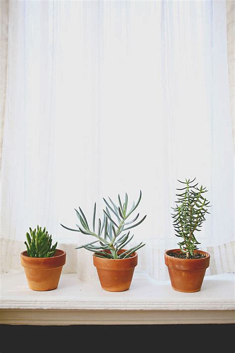 Best House Plants For Window Choosing The Best Indoor Plants For Your Interior