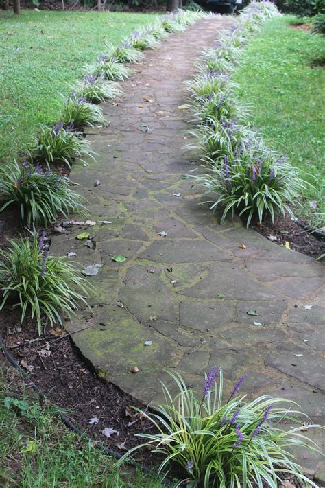 Landscape Edging Sidewalk Sidewalk Edge Ornamental Monkey Grass Like Dr Jekyll