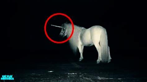 ver imagenes mitologicas 5 unicornios reales captados en c 225 mara criaturas