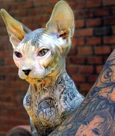 sphynx tattoo wonderfultattooed sphynx cats pics