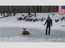 Buck rescue: family saves deer stuck on frozen lake in ... Lankford S