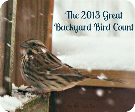 backyard bird count how the sun rose the great backyard bird count is coming