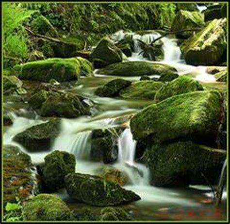 imagenes de naturaleza varias rel 225 jate con los sonidos de la naturaleza en v 237 deo