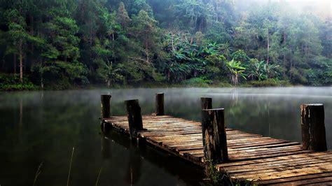 jungle lake bridge evaporation fog hd wallpaper