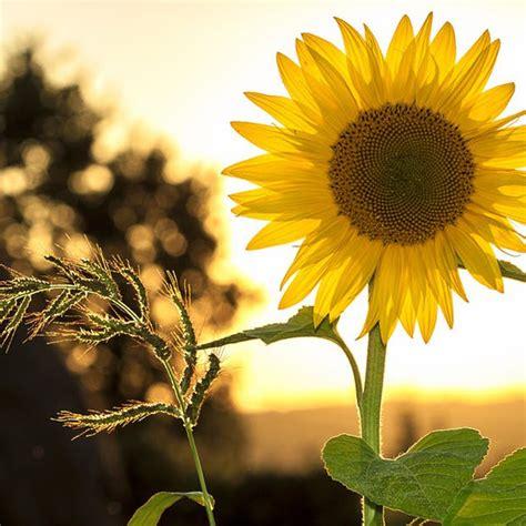 Pelembab Natur E Untuk Jerawat minyak alami ini bantu menumpaskan jerawat natur e