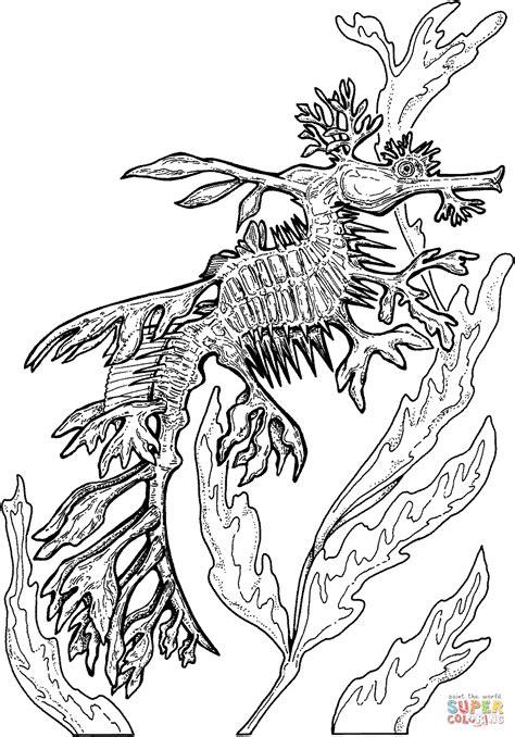 sea dragons coloring pages leafy seadragon coloring page free printable coloring pages