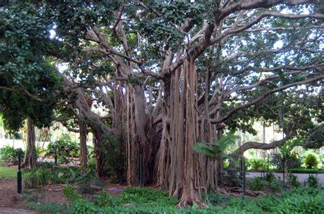 Botanical Garden Brisbane Park Brisbane Brisbane