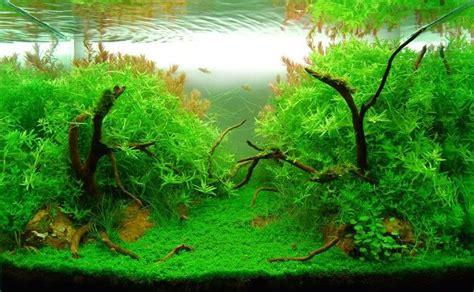 aquarium schrank ikea aquarium unterschrank ikea expedit nazarm