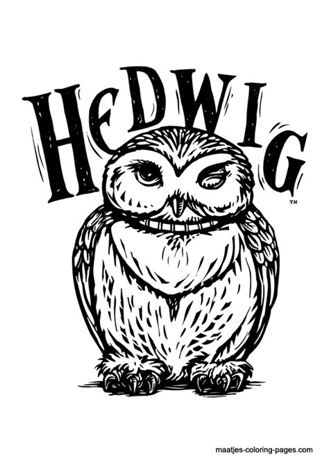 harry potter owl coloring pages harry potter coloring page pictures