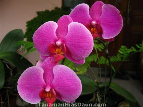 april  blog budidaya tumbuhan  hewan