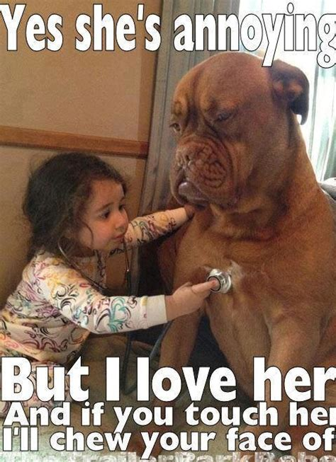 Lovers Meme - funny dog quotes lover quotesgram