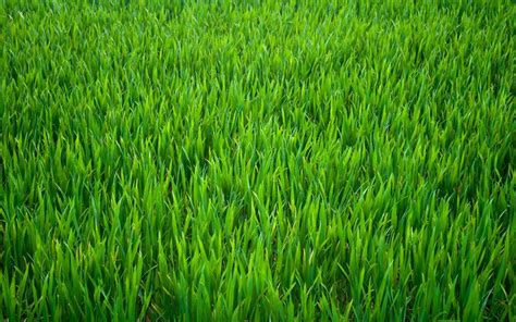 Paper From Grass - green grass background edible wafer paper a4 sheet ebay