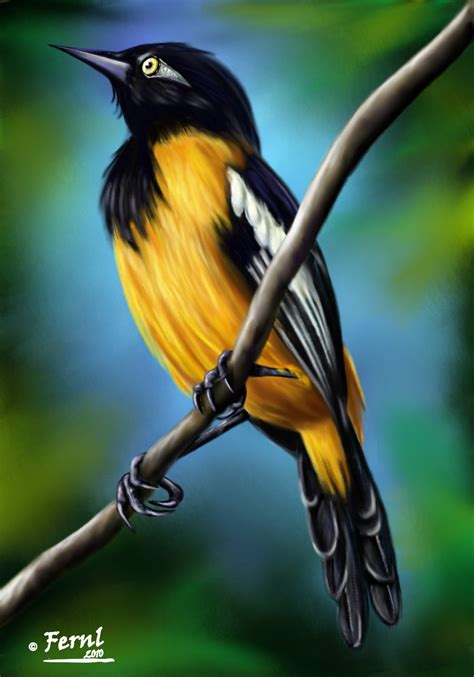 imagenes simbolos naturales de venezuela venezuela febrero 2013