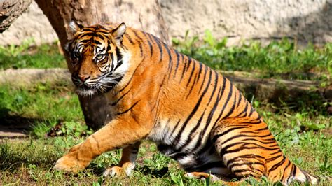 Cool Animals Pictures Of Wild Animals Tigers Freephotosforcommercialuse Com Images Animals