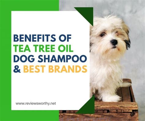 tea tree for dogs benefits of tea tree in shoo best brands