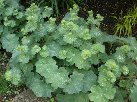 Natural Perennial Plants For Shade Homesfeed Flowers For Shade Gardens