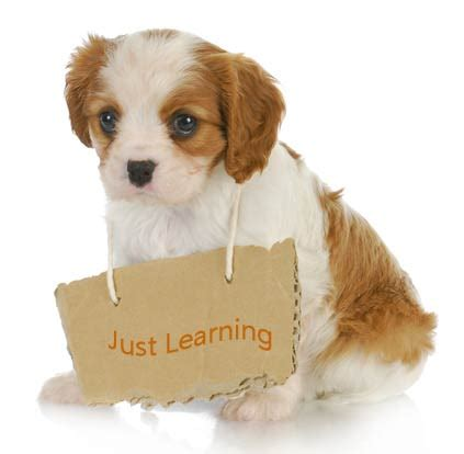 puppy tips top 10 puppy tips
