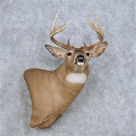 wall mount pedestal whitetail deer wall pedestal mount for sale 14104 the