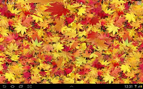 google images fall leaves autumn leaves 3d lwp android apps on google play