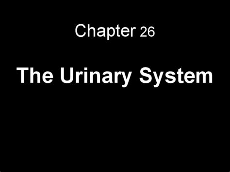 powerpoint templates urinary system chapter 26 the urinary system docslide