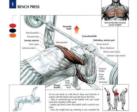 bench press muscle used discover the ultimate 5 workout that will get you pumped