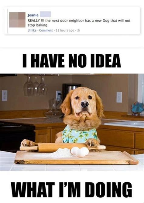 T Dog Memes - i have no idea what i m doing in 15 pictures pophangover
