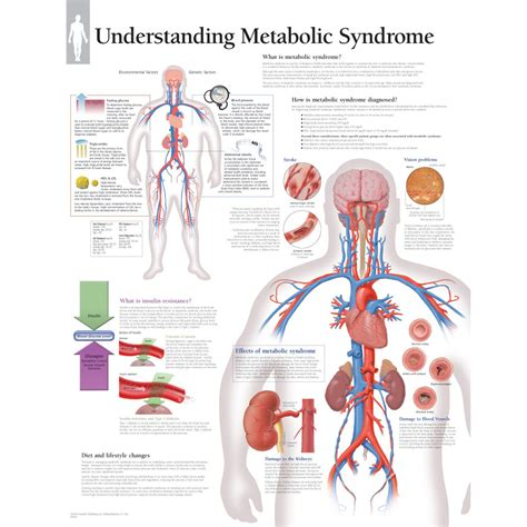 15 Signs You Metabolism Problems by Metabolic Pictures Posters News And On