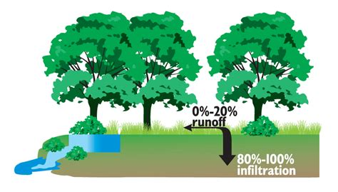 What Is Water Shed by Increase In Stormwater Runoff With Urbanization