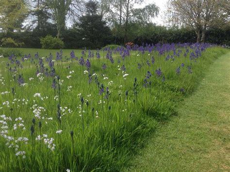 best 25 meadow garden ideas on pinterest wild flower meadow wild flower gardens and orchards