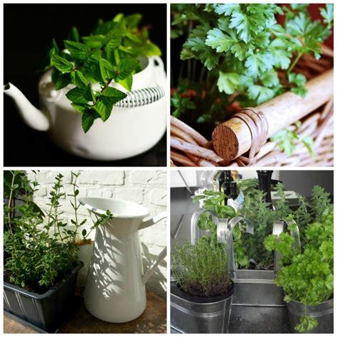growing herbs indoors   grow herb plants indoors