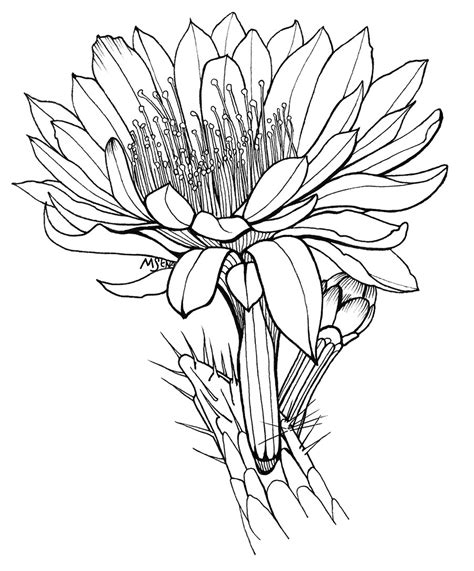 cactus flower drawing clipart best