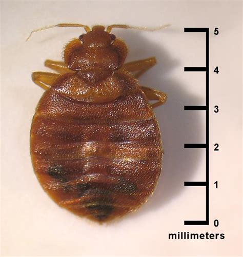 bed bug control in ri ma ct me big blue bug solutions