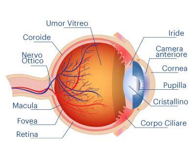 occhio interno boys contanoblog struttura dell occhio e dell orecchio