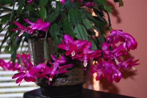 Plante Grasse A Fleur Blanche by Plante Grasse A Fleur Violette Petites Fleurs Blanches