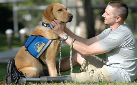 how to get an anxiety service service dogs for anxiety how to get one costs best breeds